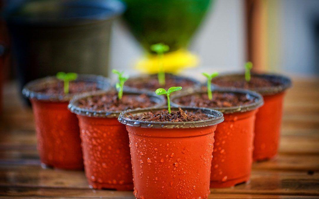 La hortaliza en casa, nuestros propios alimentos