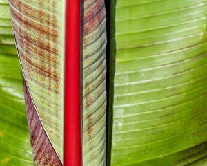 Platos con hojas naturales