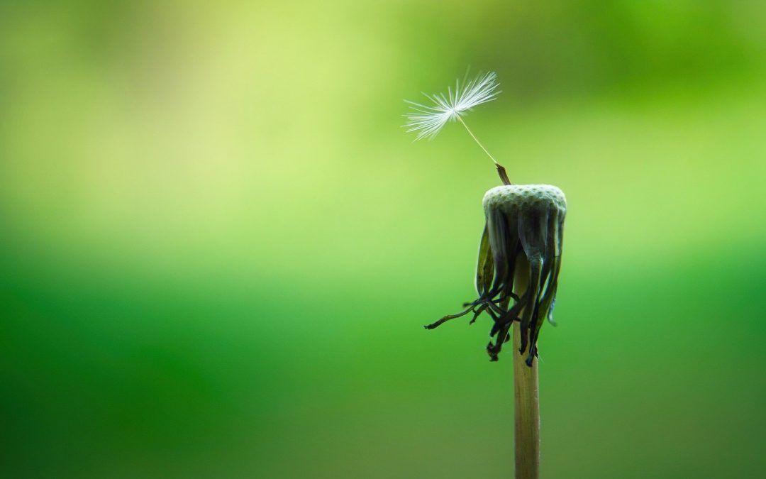 La esperanza, sobreponerse a las adversidades